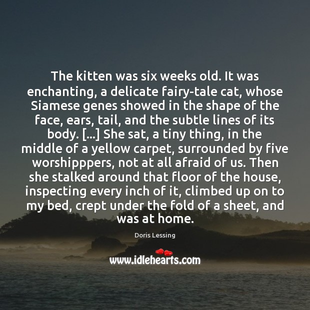 The kitten was six weeks old. It was enchanting, a delicate fairy-tale Doris Lessing Picture Quote