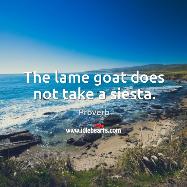The lame goat does not take a siesta. Image