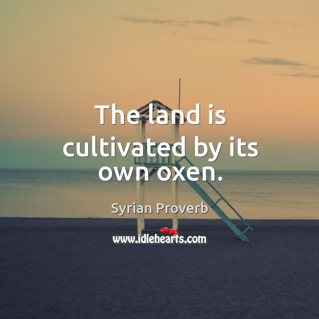 The land is cultivated by its own oxen. Syrian Proverbs Image