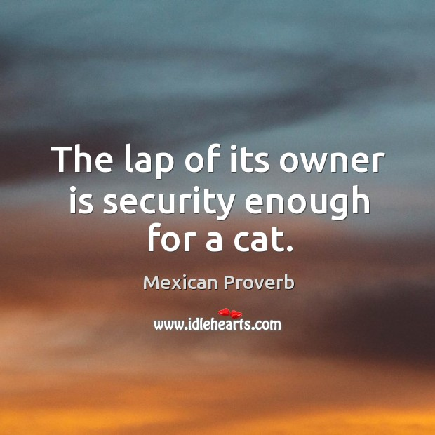 Image, The lap of its owner is security enough for a cat.