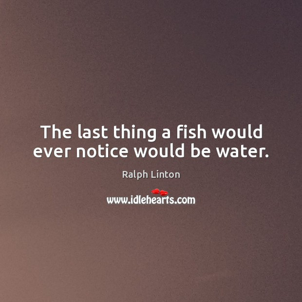 The last thing a fish would ever notice would be water. Image