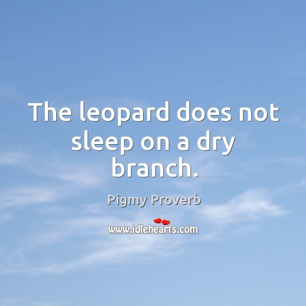 The leopard does not sleep on a dry branch. Pigmy Proverbs Image