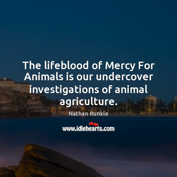 Image, The lifeblood of Mercy For Animals is our undercover investigations of animal agriculture.