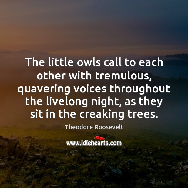 The little owls call to each other with tremulous, quavering voices throughout Image