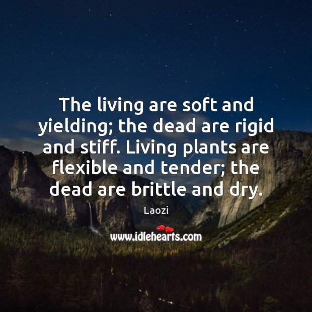 The living are soft and yielding; the dead are rigid and stiff. Laozi Picture Quote