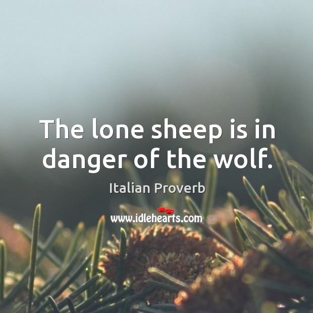 Image, The lone sheep is in danger of the wolf.