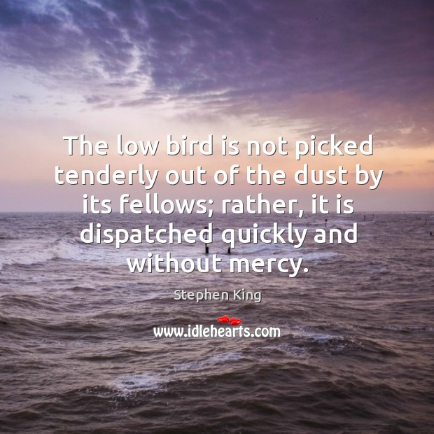 Image, The low bird is not picked tenderly out of the dust by