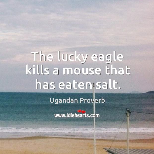 The lucky eagle kills a mouse that has eaten salt. Ugandan Proverbs Image
