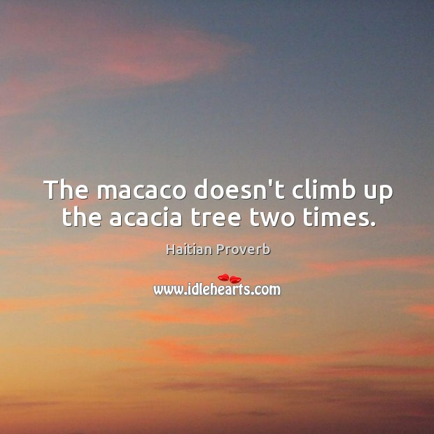 The macaco doesn't climb up the acacia tree two times. Haitian Proverbs Image