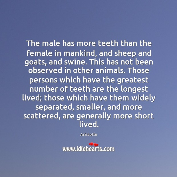 Image, The male has more teeth than the female in mankind, and sheep