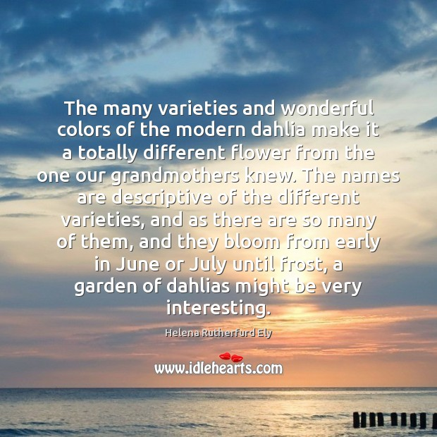 The many varieties and wonderful colors of the modern dahlia make it Flowers Quotes Image