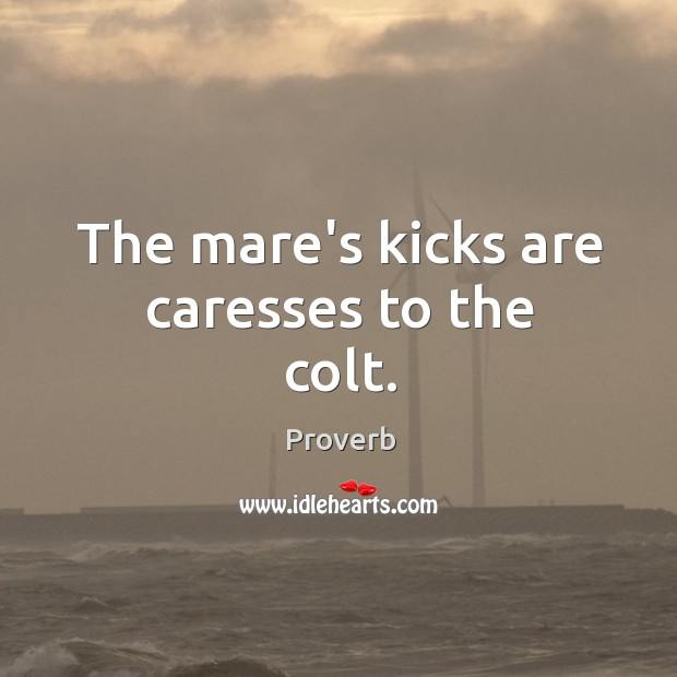 Image, The mare's kicks are caresses to the colt.