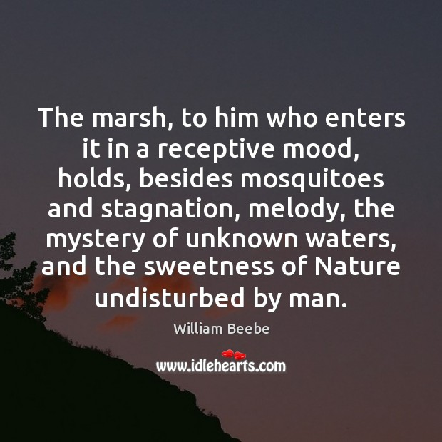 The marsh, to him who enters it in a receptive mood, holds, Image