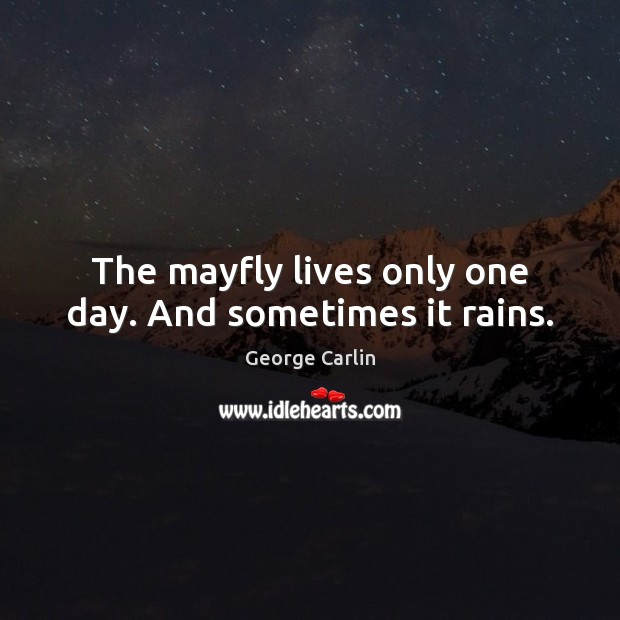 The mayfly lives only one day. And sometimes it rains. Image