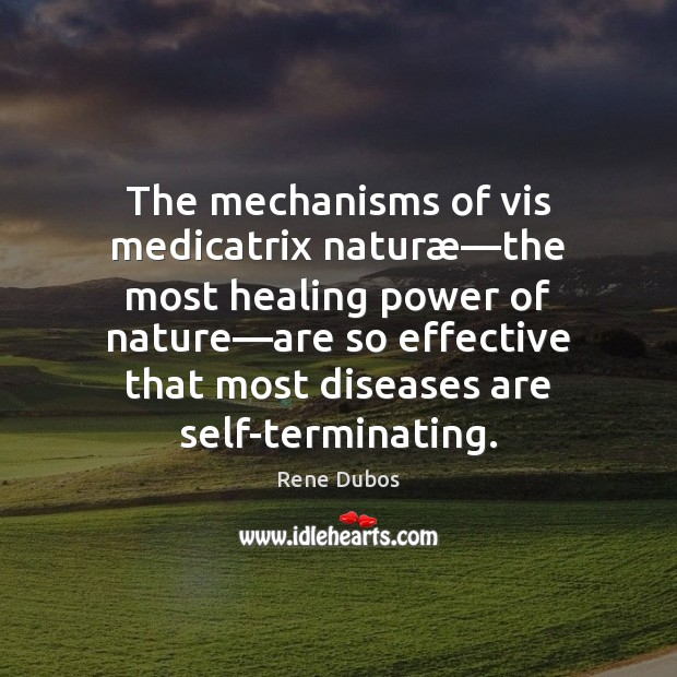 The mechanisms of vis medicatrix naturæ—the most healing power of nature— Rene Dubos Picture Quote