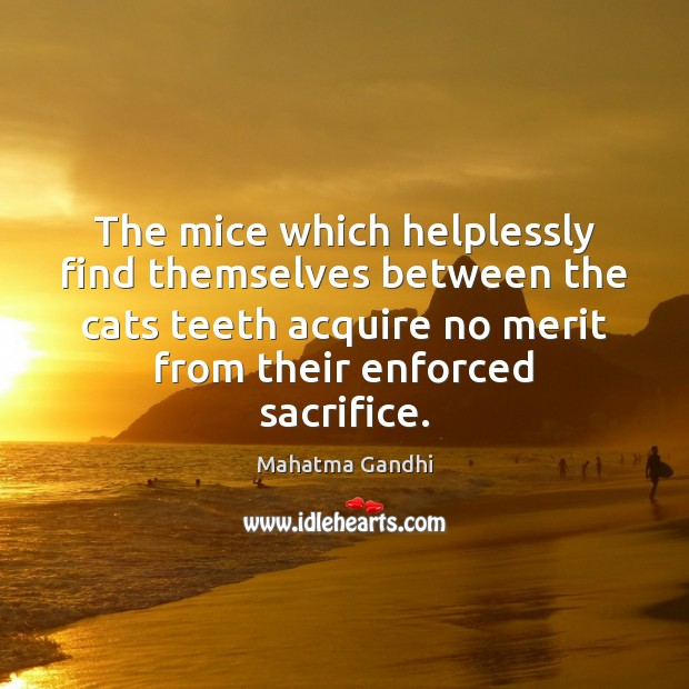 The mice which helplessly find themselves between the cats teeth acquire no Mahatma Gandhi Picture Quote