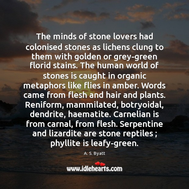 Image, The minds of stone lovers had colonised stones as lichens clung to