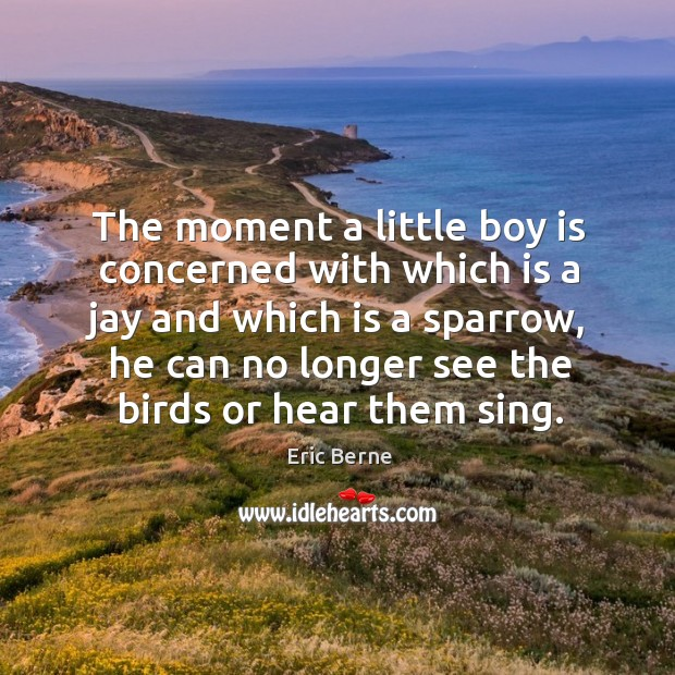 The moment a little boy is concerned with which is a jay and which is a Image