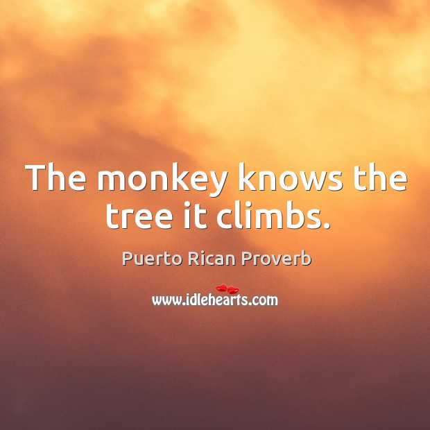 The monkey knows the tree it climbs. Puerto Rican Proverbs Image