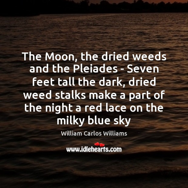 The Moon, the dried weeds and the Pleiades – Seven feet tall Image