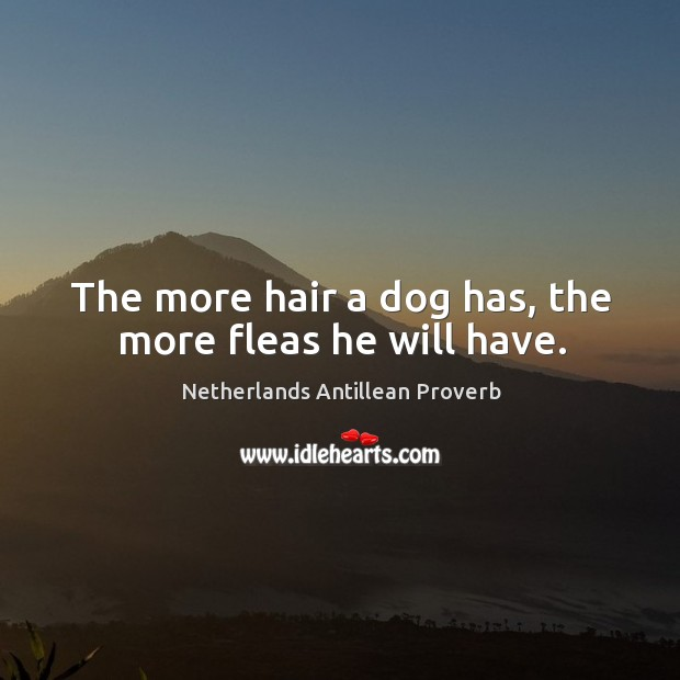 The more hair a dog has, the more fleas he will have. Netherlands Antillean Proverbs Image