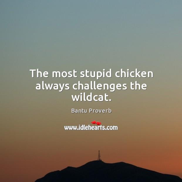 The most stupid chicken always challenges the wildcat. Bantu Proverbs Image