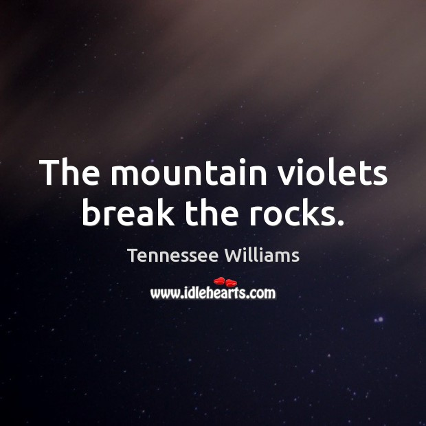 The mountain violets break the rocks. Image
