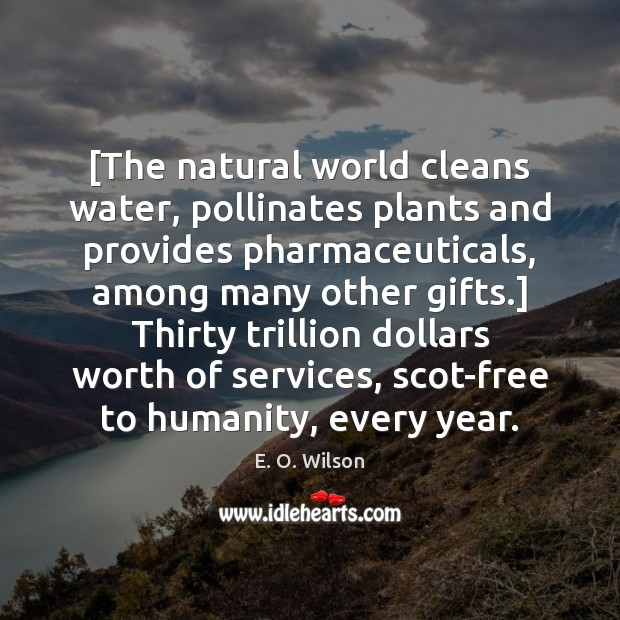 Image, [The natural world cleans water, pollinates plants and provides pharmaceuticals, among many