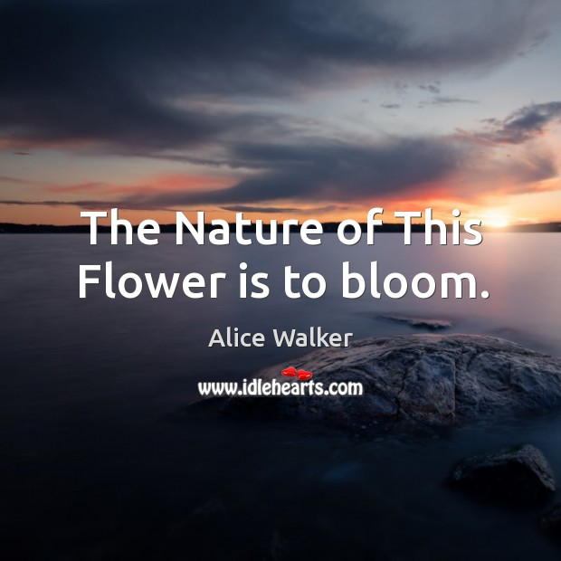 The nature of this flower is to bloom. Image