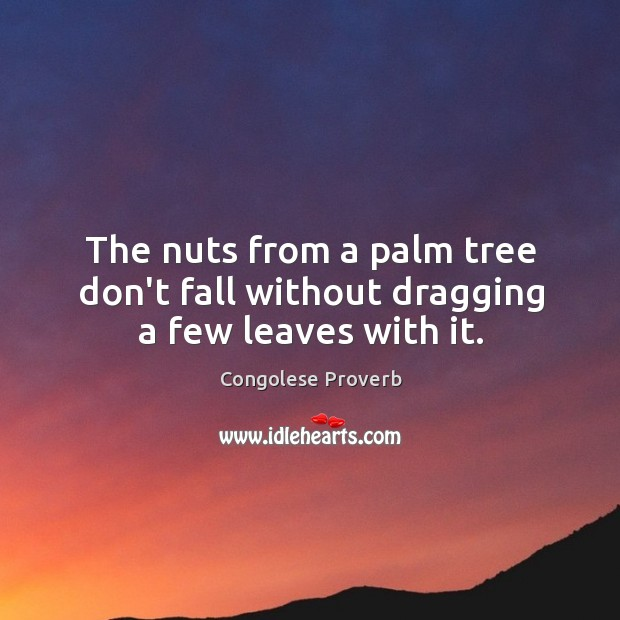 The nuts from a palm tree don't fall without dragging a few leaves with it. Congolese Proverbs Image