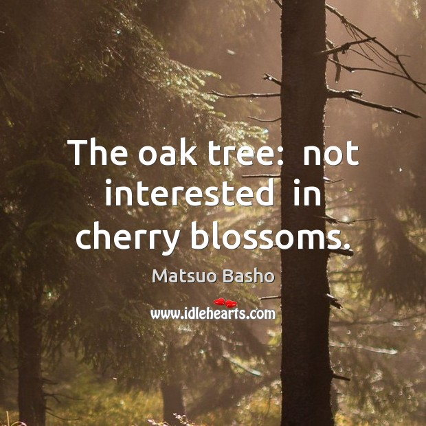 The oak tree:  not interested  in cherry blossoms. Matsuo Basho Picture Quote