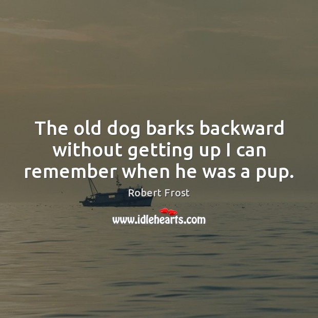 Image, The old dog barks backward without getting up I can remember when he was a pup.