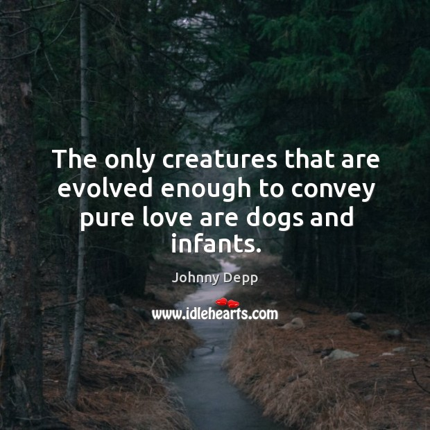 Image, The only creatures that are evolved enough to convey pure love are dogs and infants.