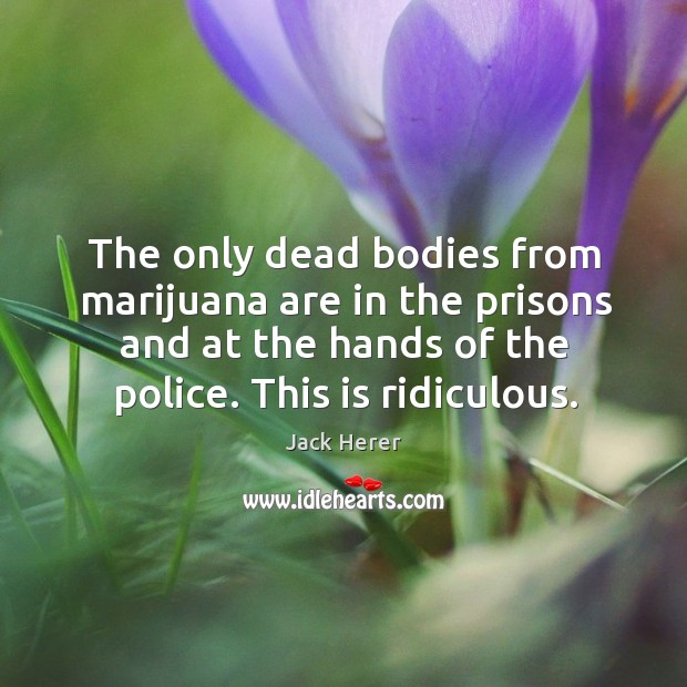 The only dead bodies from marijuana are in the prisons and at the hands of the police. Image