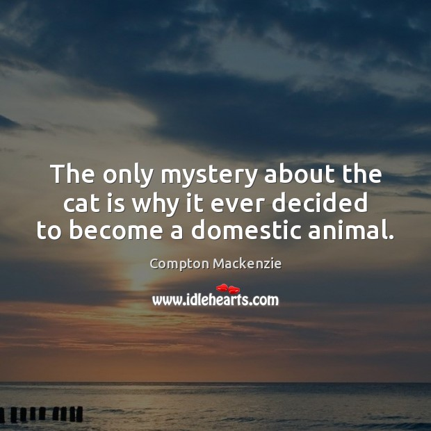 The only mystery about the cat is why it ever decided to become a domestic animal. Image