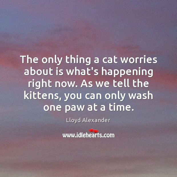 The only thing a cat worries about is what's happening right now. Lloyd Alexander Picture Quote