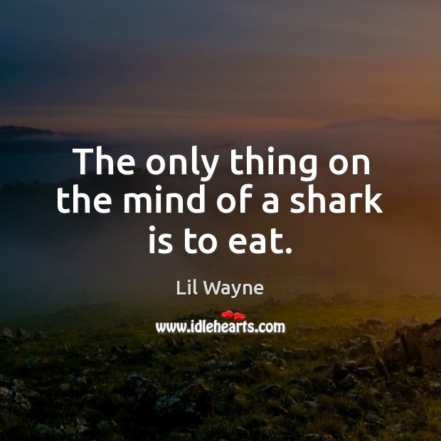 Image, The only thing on the mind of a shark is to eat.