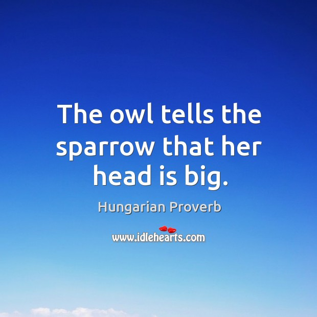 Image, The owl tells the sparrow that her head is big.