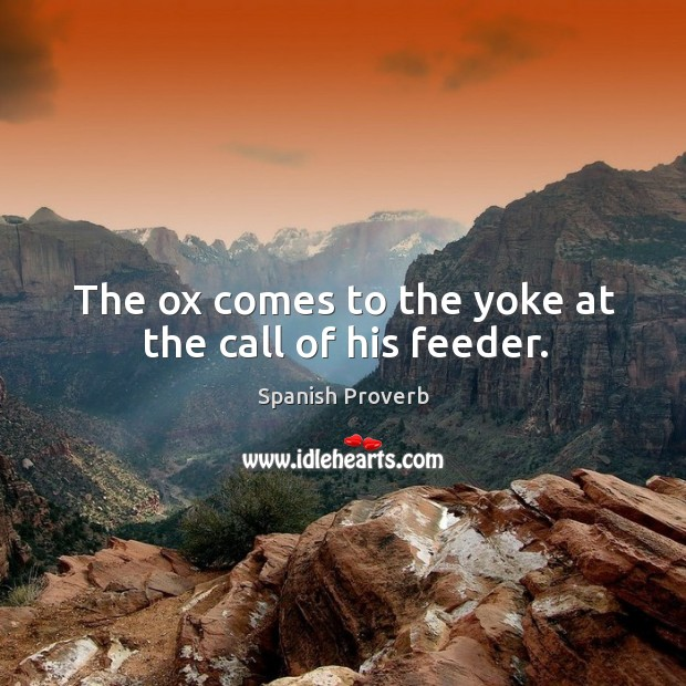 Image, The ox comes to the yoke at the call of his feeder.