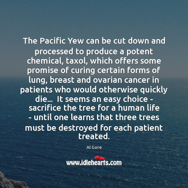 The Pacific Yew can be cut down and processed to produce a Al Gore Picture Quote