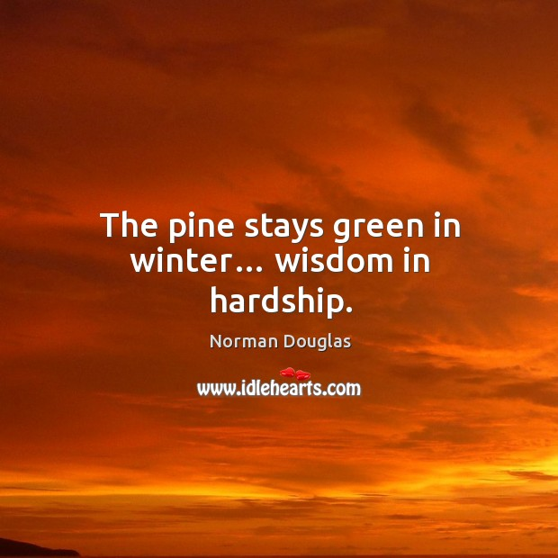 The pine stays green in winter… wisdom in hardship. Image