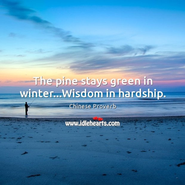 The pine stays green in winter…wisdom in hardship. Image
