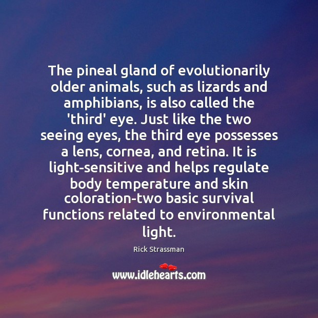 The pineal gland of evolutionarily older animals, such as lizards and amphibians, Image