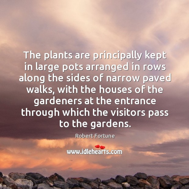 The plants are principally kept in large pots arranged in rows along the sides of narrow paved walks Robert Fortune Picture Quote