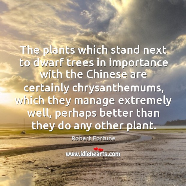 The plants which stand next to dwarf trees in importance with the chinese Robert Fortune Picture Quote