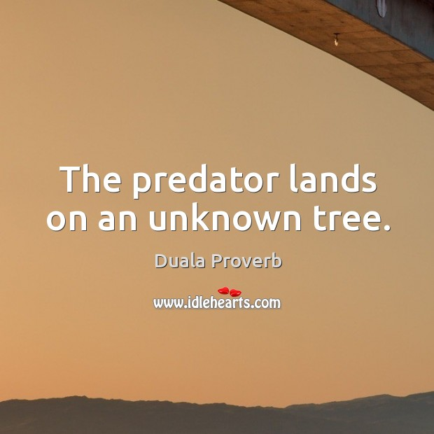 The predator lands on an unknown tree. Duala Proverbs Image