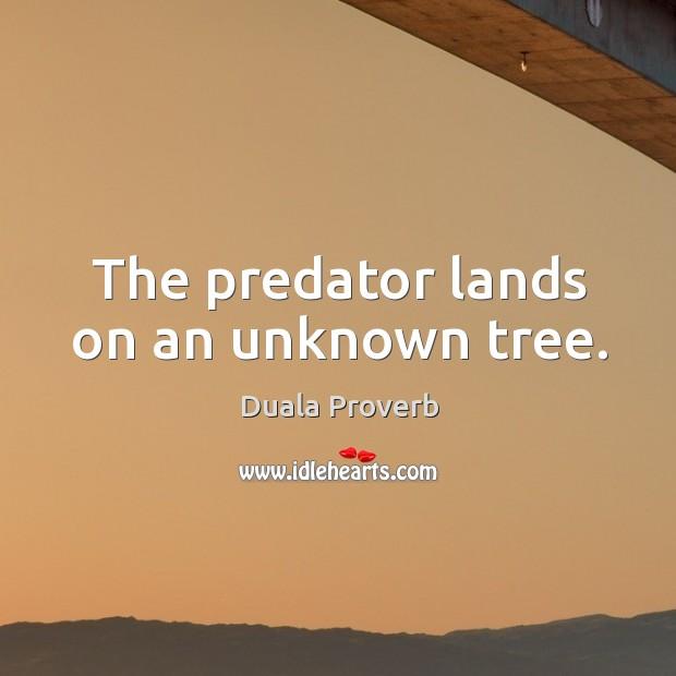 Duala Proverbs