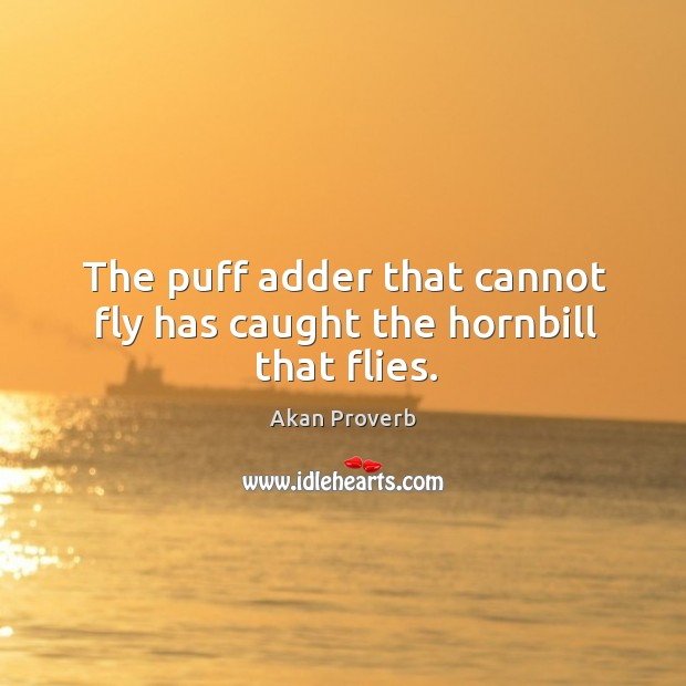 The puff adder that cannot fly has caught the hornbill that flies. Akan Proverbs Image