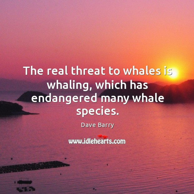 The real threat to whales is whaling, which has endangered many whale species. Image