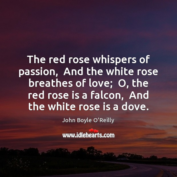Image, The red rose whispers of passion,  And the white rose breathes of
